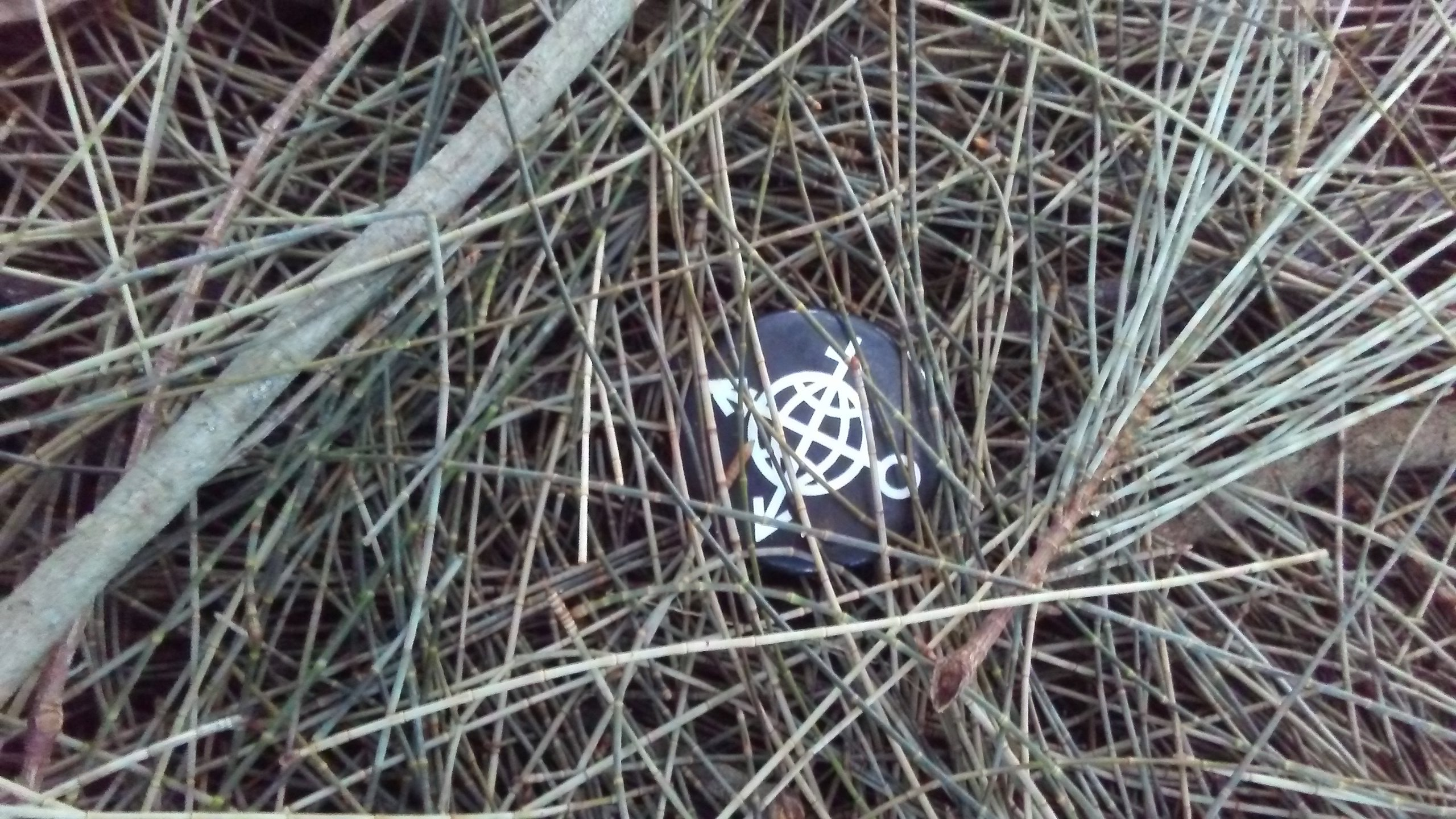 20190202_074414-jpg.48828_Needle in a Haystack_Missed Connections_Squat the Planet_4:05 AM