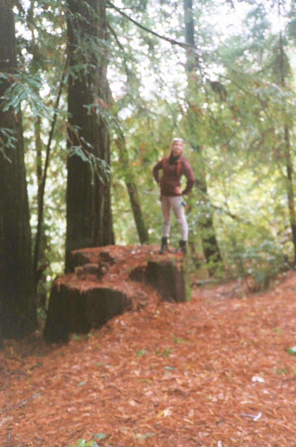 3_Redwood Lucia.jpg