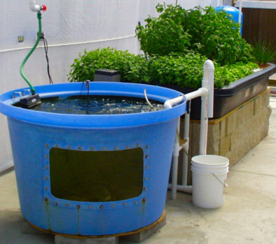aquaponics1-jpg.27949_Growing Food and Other Cool Stuff_Wilderness Survival_Squat the Planet_7:16 AM