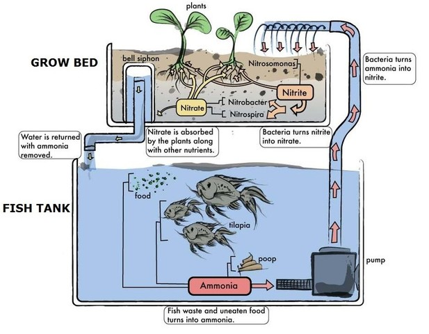 aquaponics_design1_e1384871167728-jpg.27950_Growing Food and Other Cool Stuff_Wilderness Survival_Squat the Planet_7:16 AM