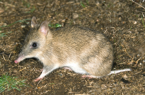bandicoot-png.52952_My attempt to being more social, share my knowledge and learn from others_Introductions_Squat the Planet_5:07 PM