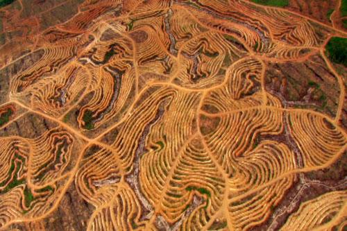 borneo-deforestation.jpg