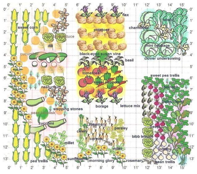 companion-planting-design-e1489845359944-640x566.jpg