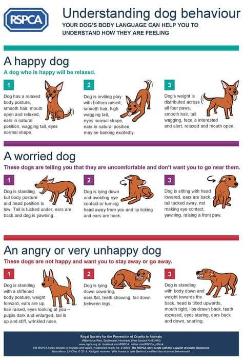 dog-behavior-1-1-jpg.54776