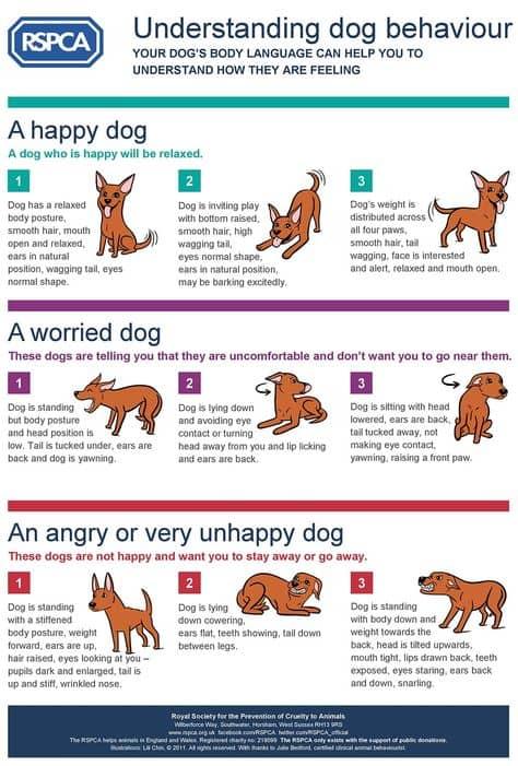 Dog-Behavior-1-1.jpg