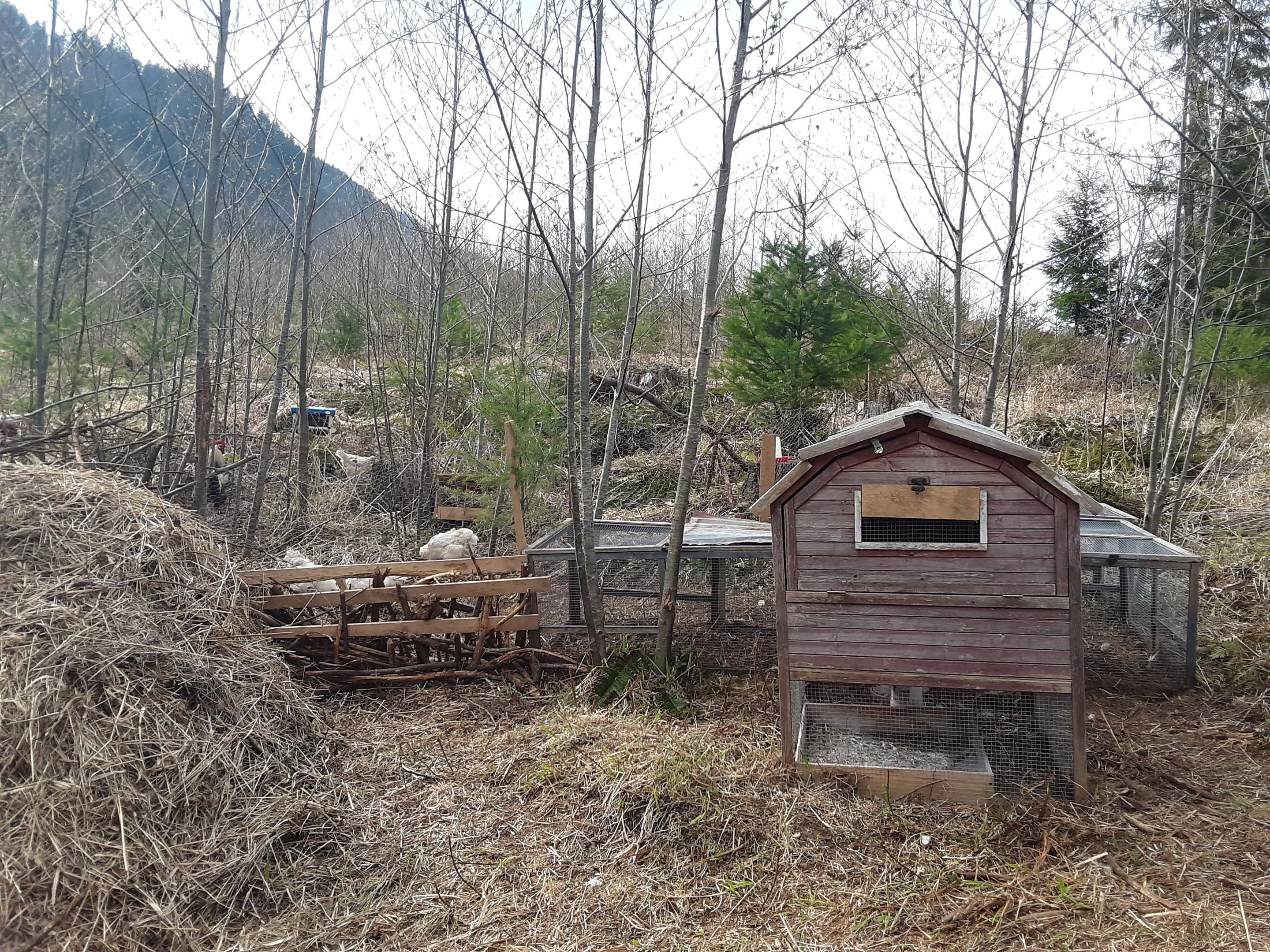 front-view-of-chicken-house-jpg.52737_Off-Grid homesteadin' wing'n it yeh_Alternative Housing_Squat the Planet_12:24 PM