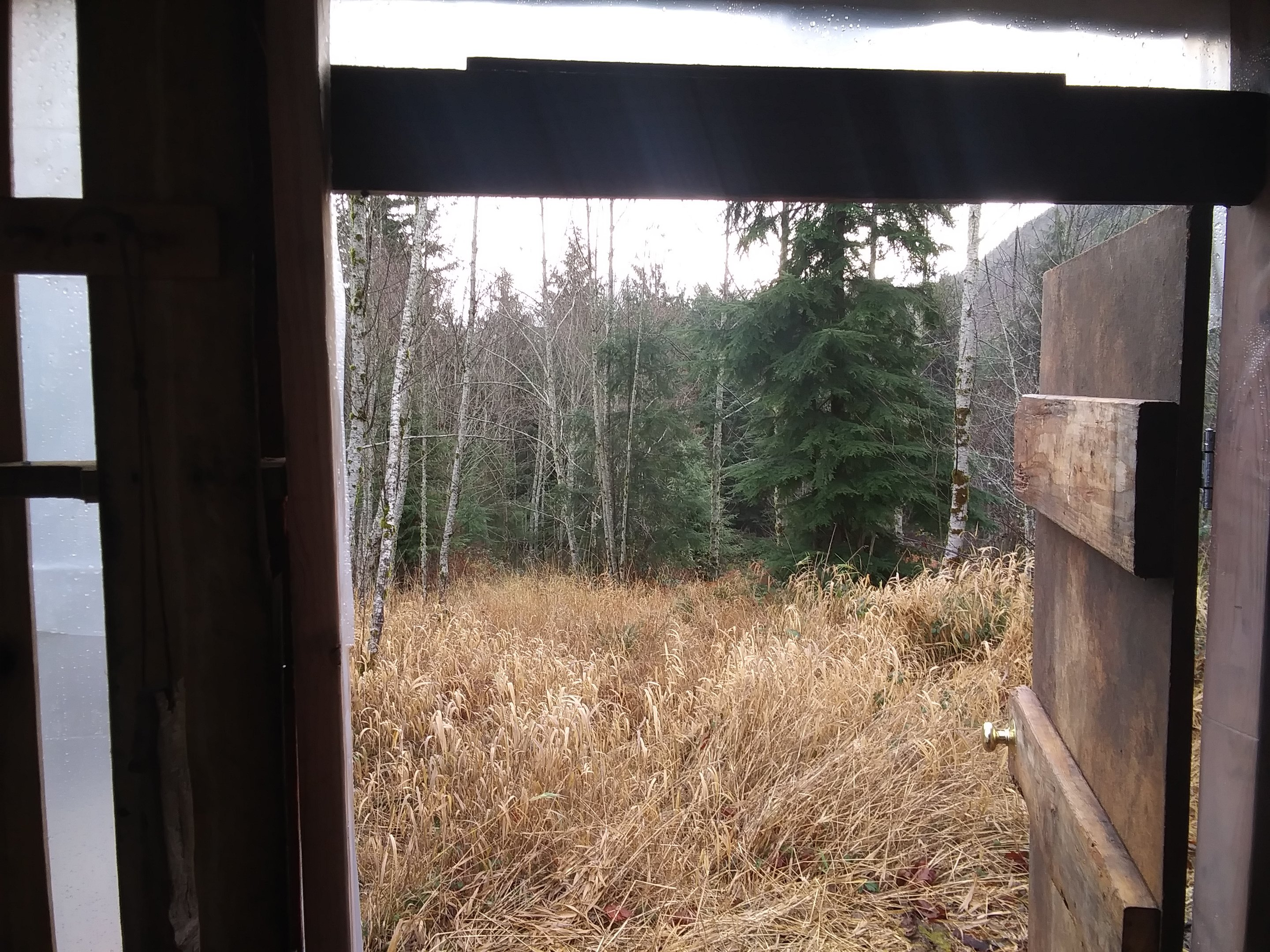 front-yard-view-from-door-jpg.52723_Off-Grid homesteadin' wing'n it yeh_Alternative Housing_Squat the Planet_12:24 PM