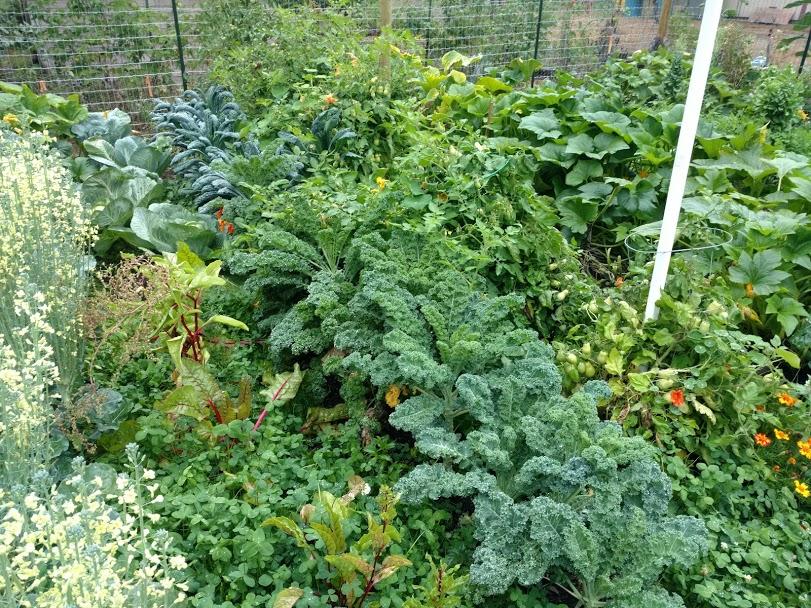 gard2-jpg.50569_Gardening / Housebitchin' advice._Your Projects & Websites_Squat the Planet_10:35 AM