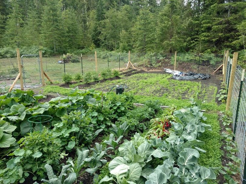 gard3-jpg.50570_Gardening / Housebitchin' advice._Your Projects & Websites_Squat the Planet_10:35 AM
