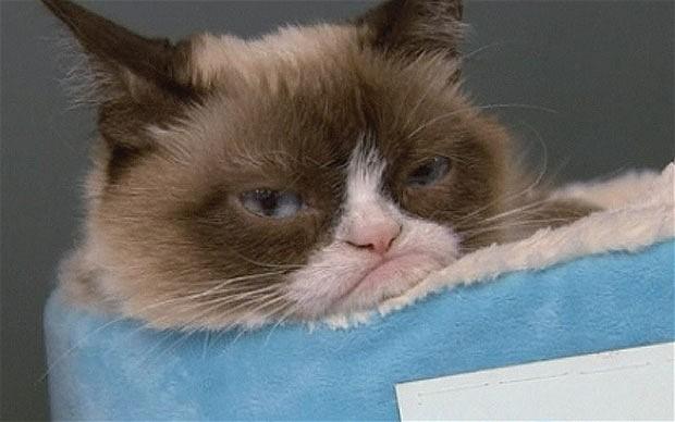 Grumpy_Cat_3000663b.jpg