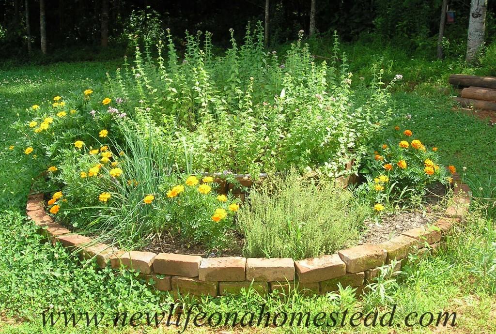 herb-bed-1024x690-jpg.22355_Flat broke homesteading_Alternative Housing_Squat the Planet_12:08 PM