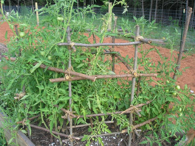 homemade-tomato-cage-medium-jpg.22352_Flat broke homesteading_Alternative Housing_Squat the Planet_12:08 PM