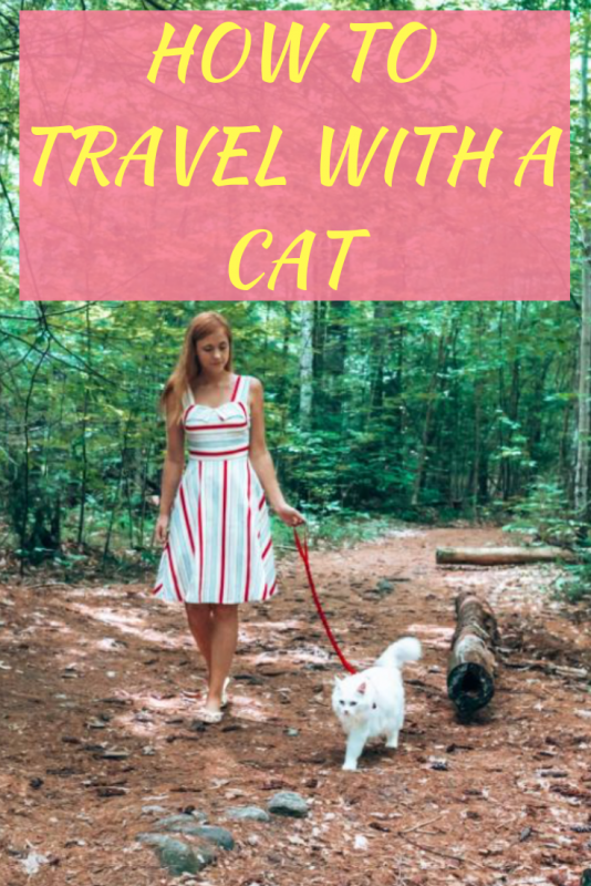 how-to-travel-with-a-cat.png