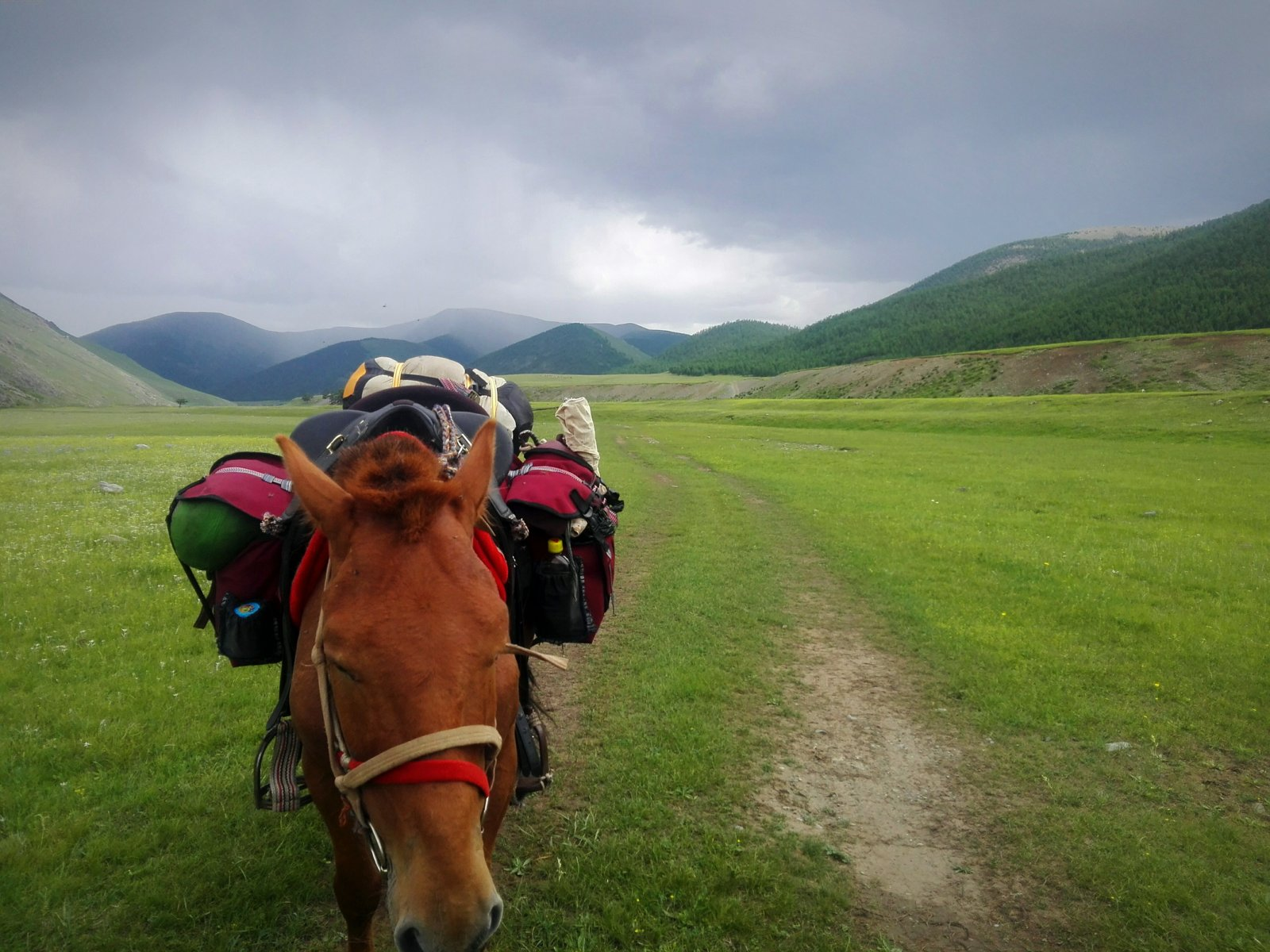 img_20160710_213325-jpg.31995_Polvo the Mongolian Horse_Furry Nomads_Squat the Planet_3:00 AM