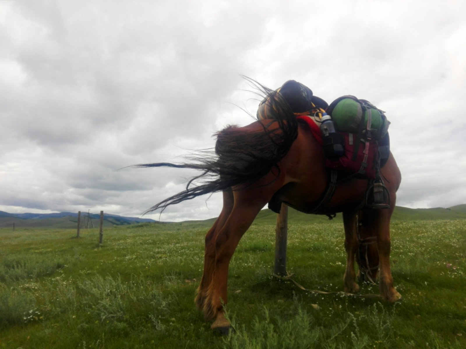 img_20160710_214639-jpg.31997_Polvo the Mongolian Horse_Furry Nomads_Squat the Planet_3:00 AM