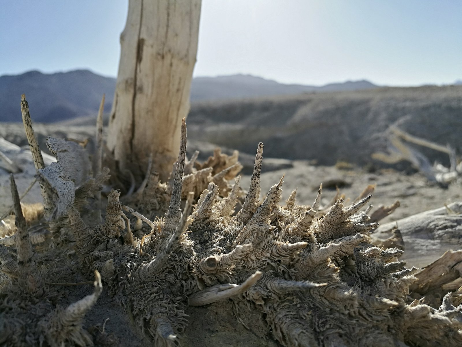 img_20170420_220643-jpg.37810_Where my Heart Lives; Dakotas to Death Valley_Travel Stories_Squat the Planet_10:07 AM