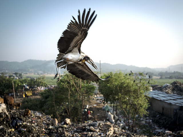 india1-jpg.21068_Living inside a landfill_Squatting_Squat the Planet_10:58 AM