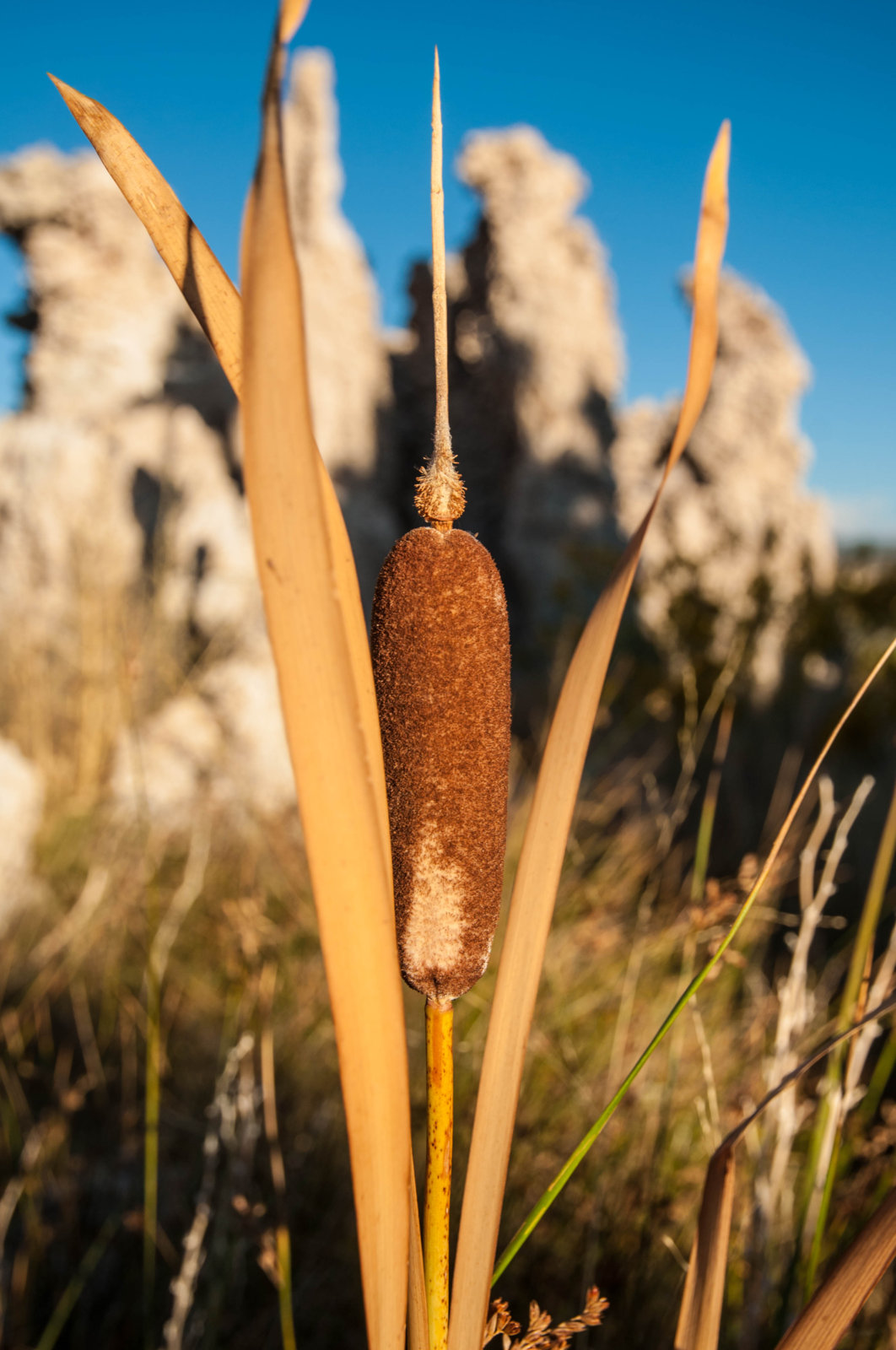 mono-cattail-jpg.30970_The New American Dream: Vagabond imagery and tales from the road._Travel Stories_Squat the Planet_1:12 PM