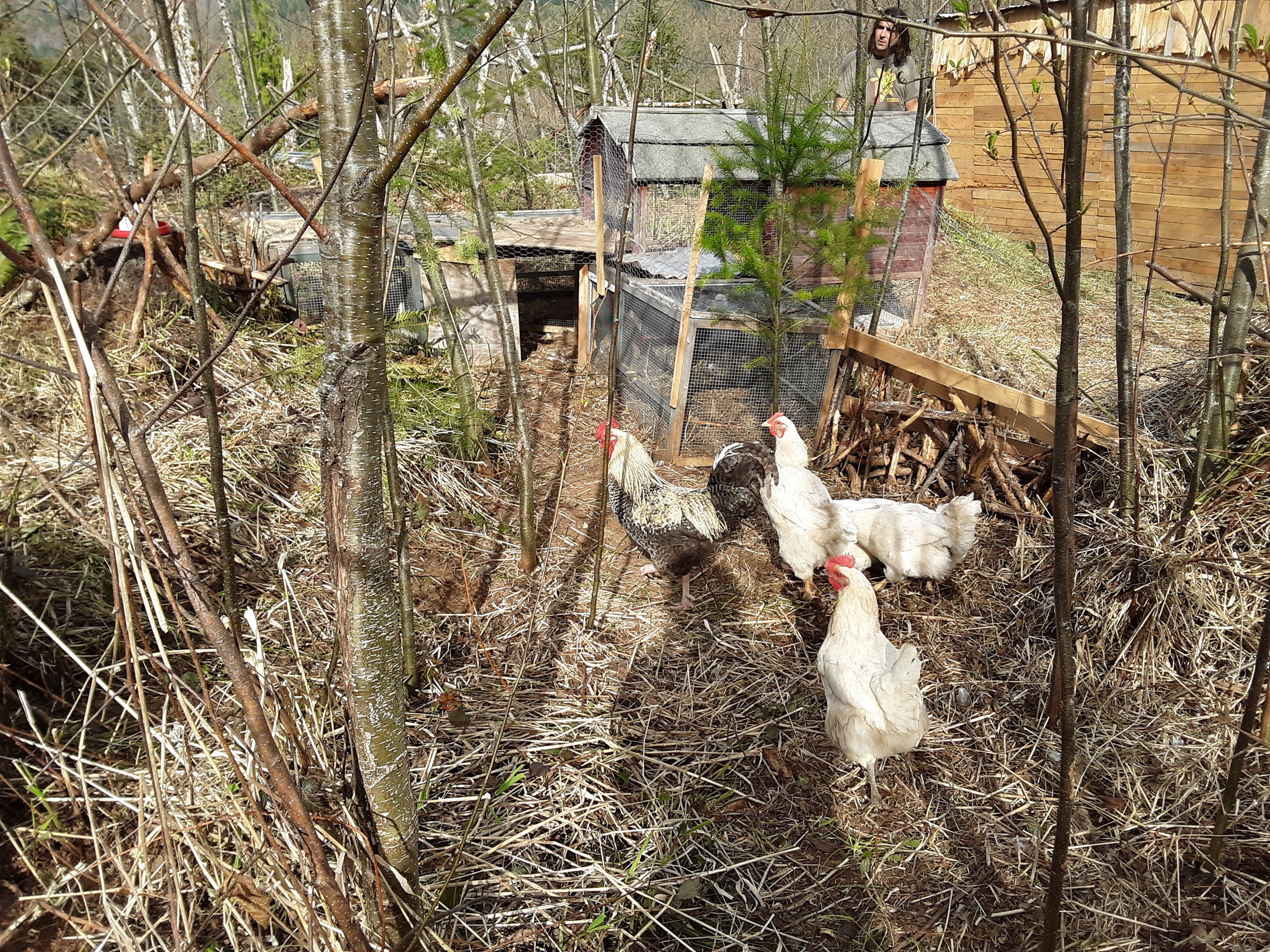 other-view-of-chicken-house-jpg.52742_Off-Grid homesteadin' wing'n it yeh_Alternative Housing_Squat the Planet_12:24 PM