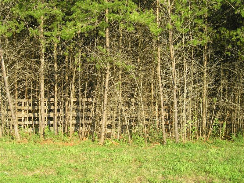 pallet-fence-001-medium-jpg.22356_Flat broke homesteading_Alternative Housing_Squat the Planet_12:08 PM