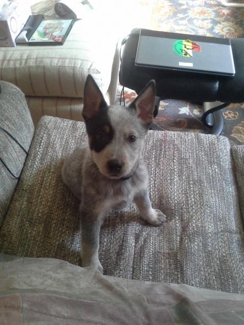puppy-jpg.34143