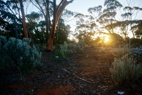 sunriseoutback-jpg.46046_Favorite place on Earth, so far?_Travel Stories_Squat the Planet_12:46 PM