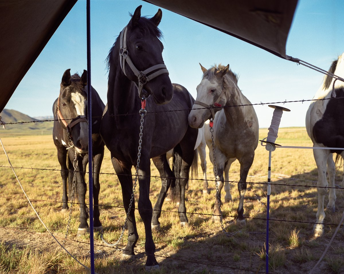 the-members-of-coyote-camp-travel-either-by-horseback-or-covered-wagon-jpg.21129_Modern hunter-gatherers_People & Cultures_Squat the Planet_6:32 PM