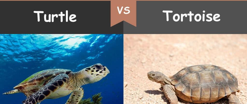 turtle-jpg.55552