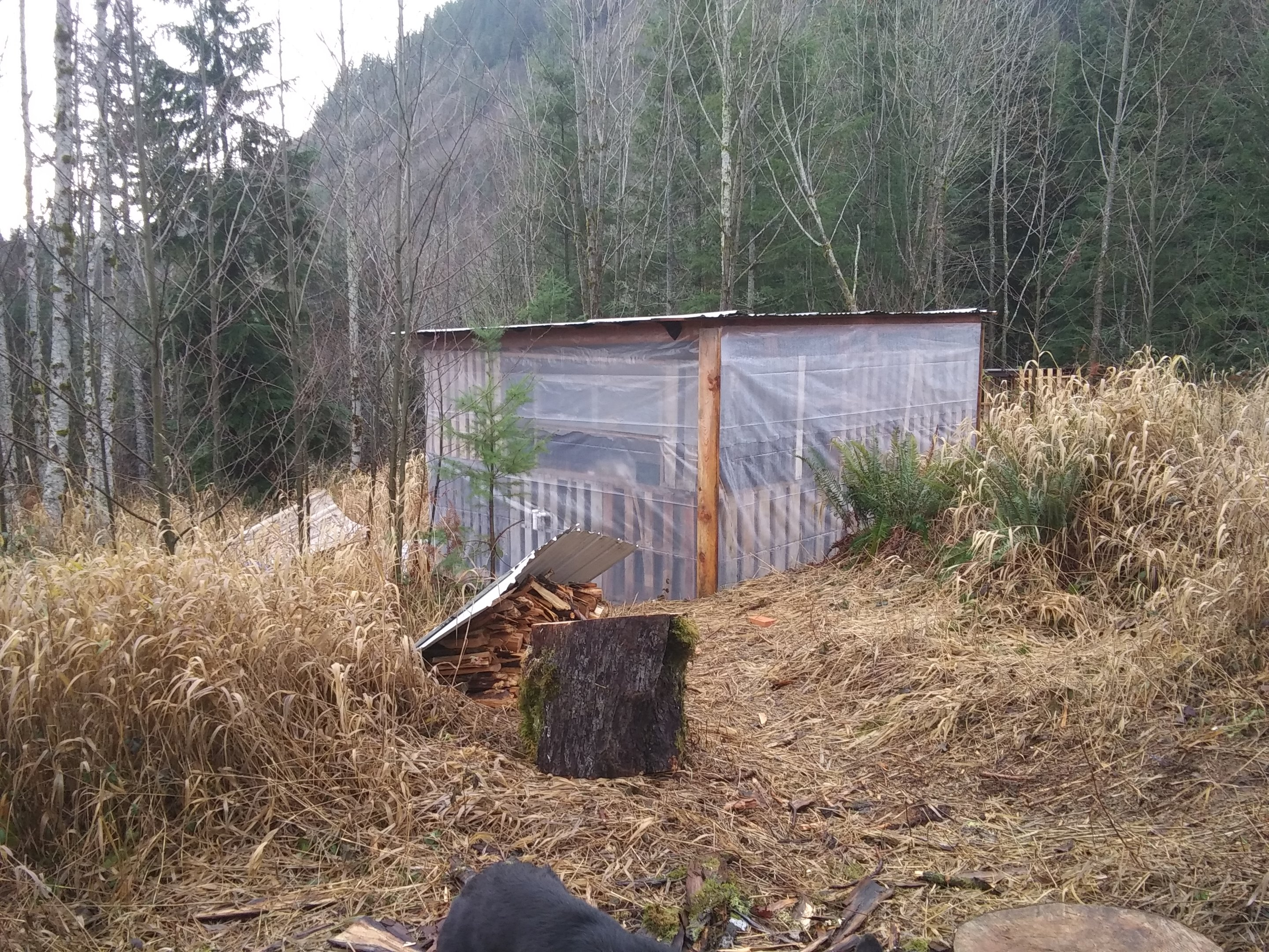 view-back-of-plasti-house-jpg.52727_Off-Grid homesteadin' wing'n it yeh_Alternative Housing_Squat the Planet_12:24 PM