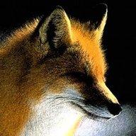 FenrirFox
